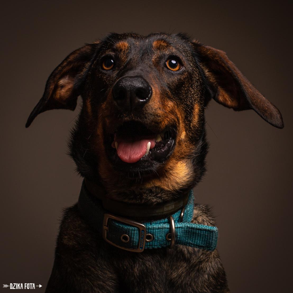 pies ze schroniska kundelek roku