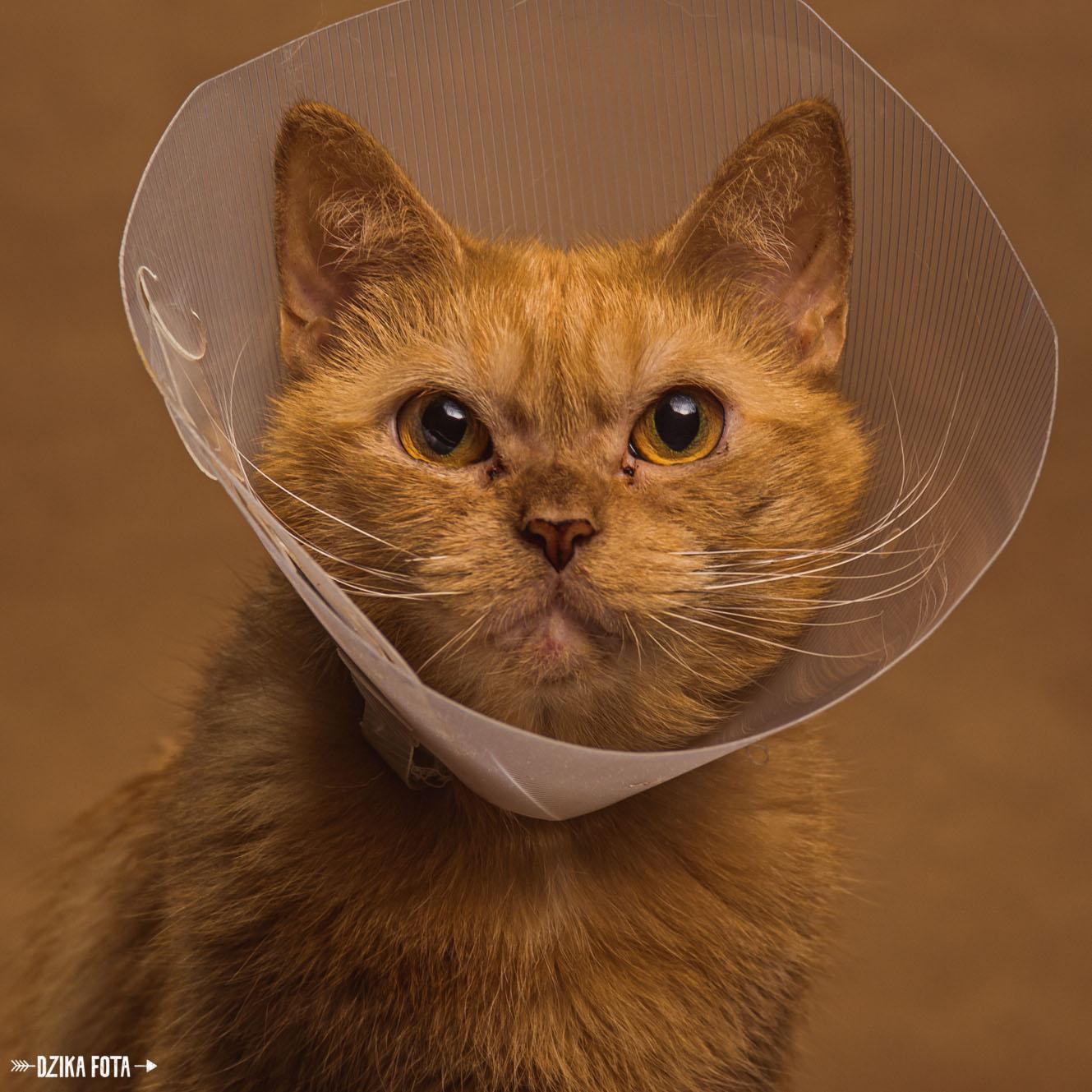 Kot fotograf zwierzęta