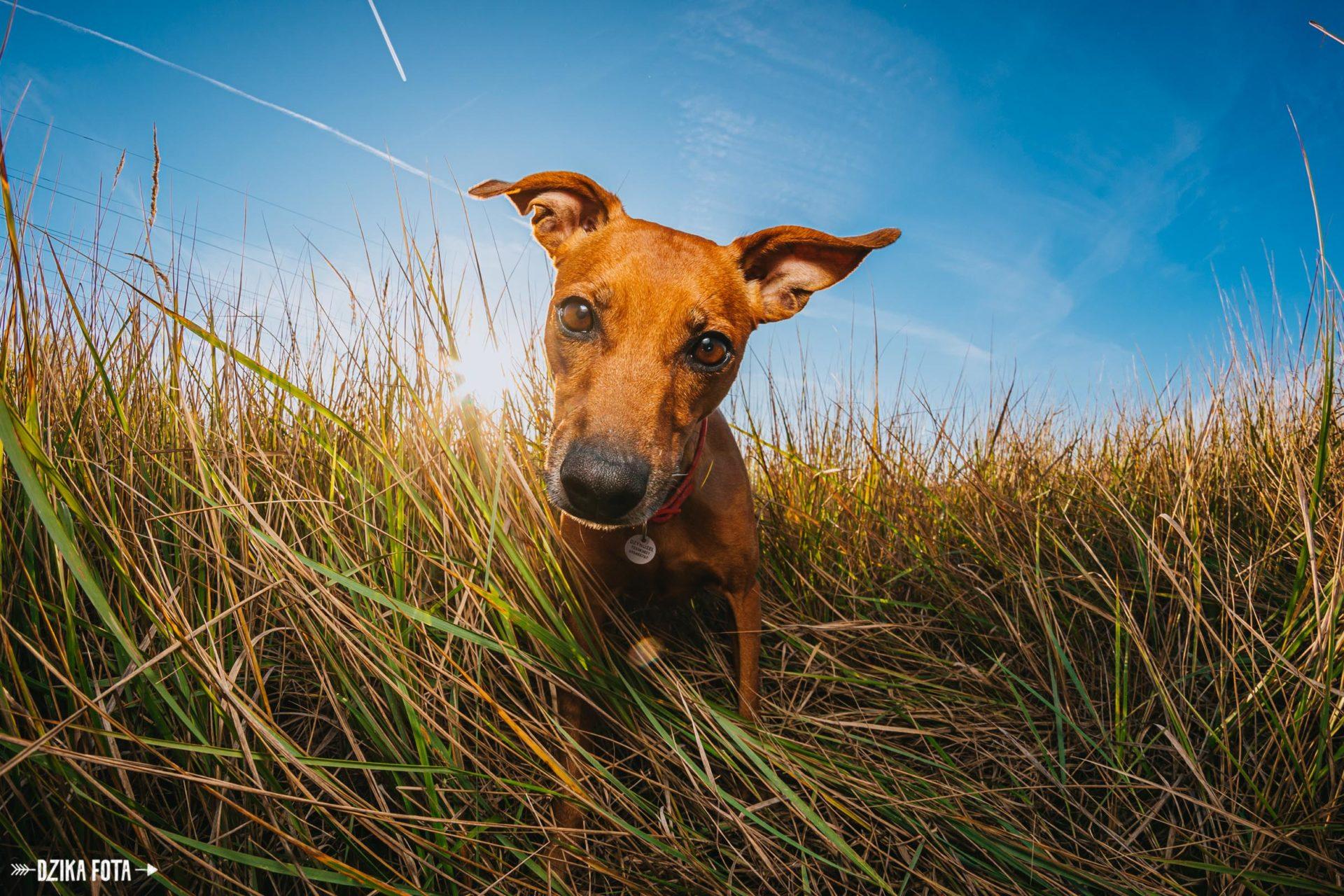 pies zdjęcie fotograf