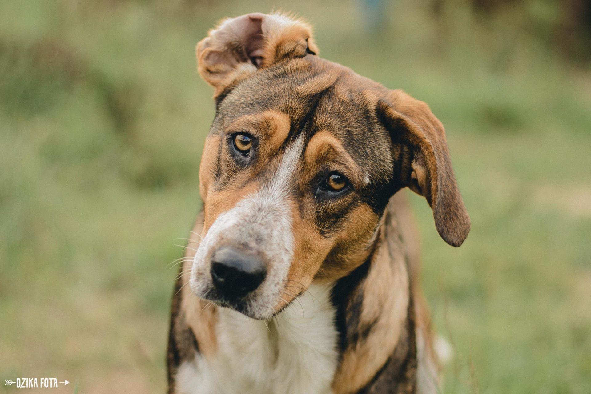psiaki schronisko pies
