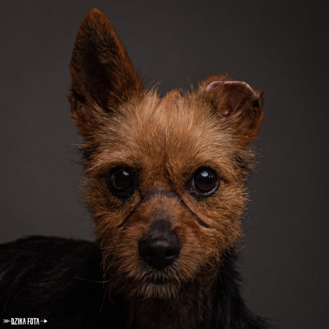 fotografia psów sesja zdjęciowa