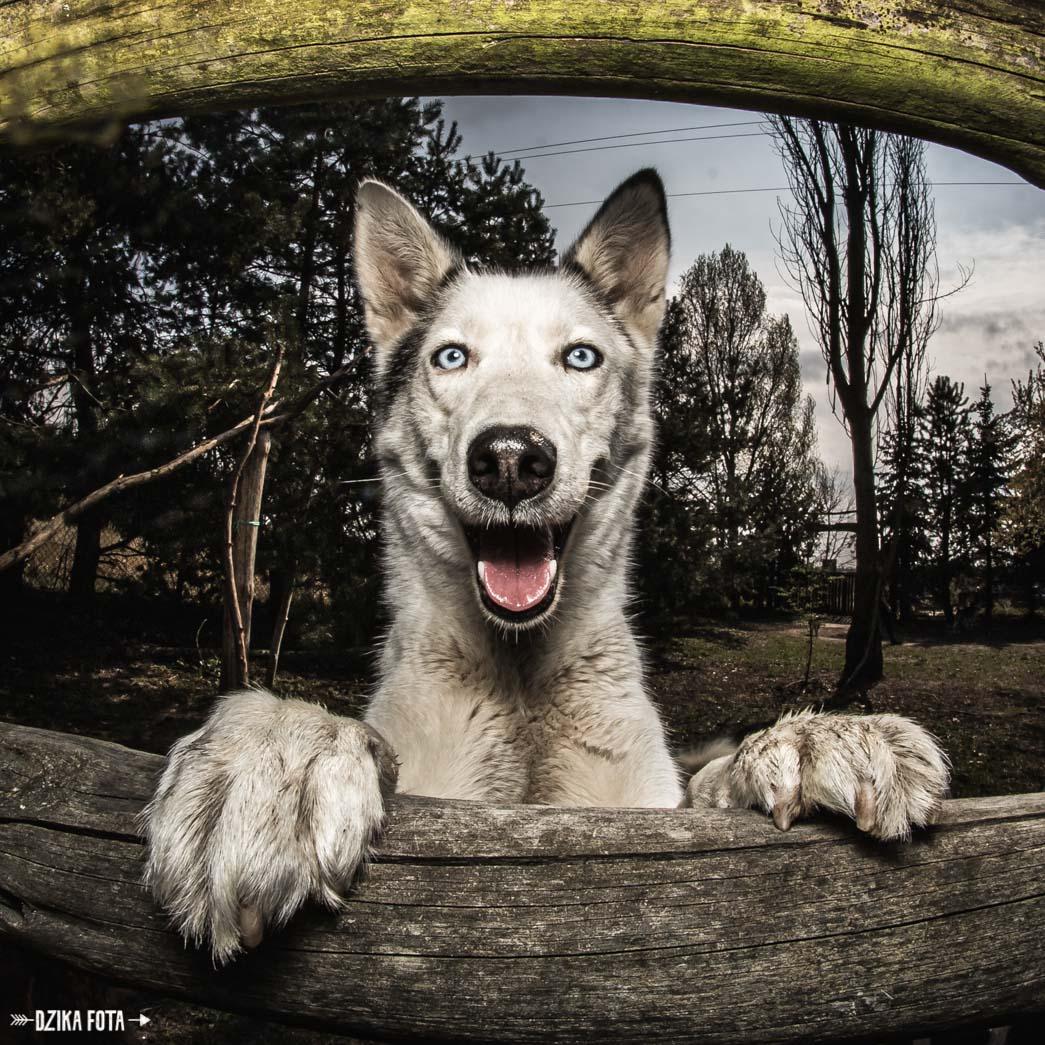psi fotograf pies