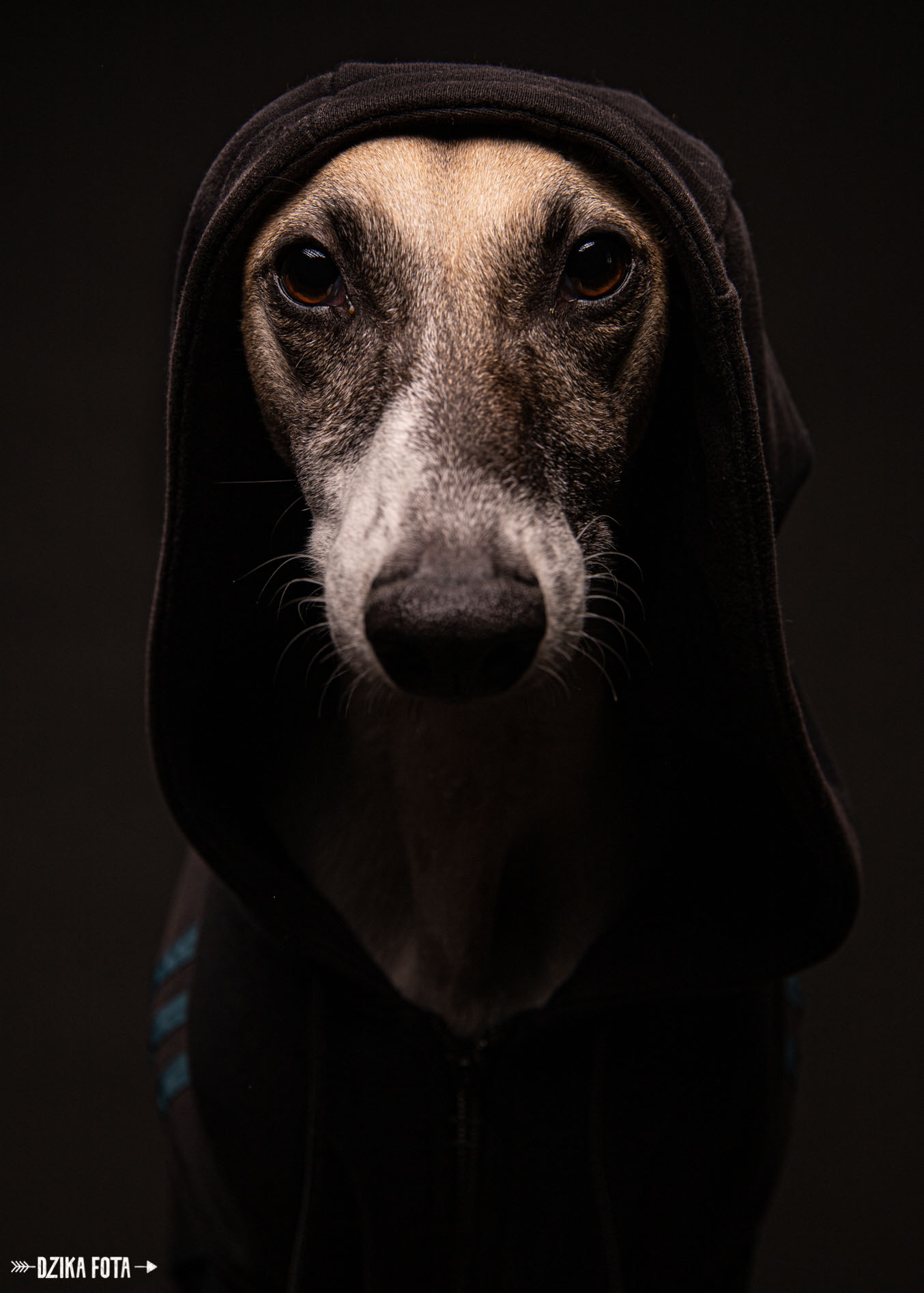 psi fotograf dzika fota