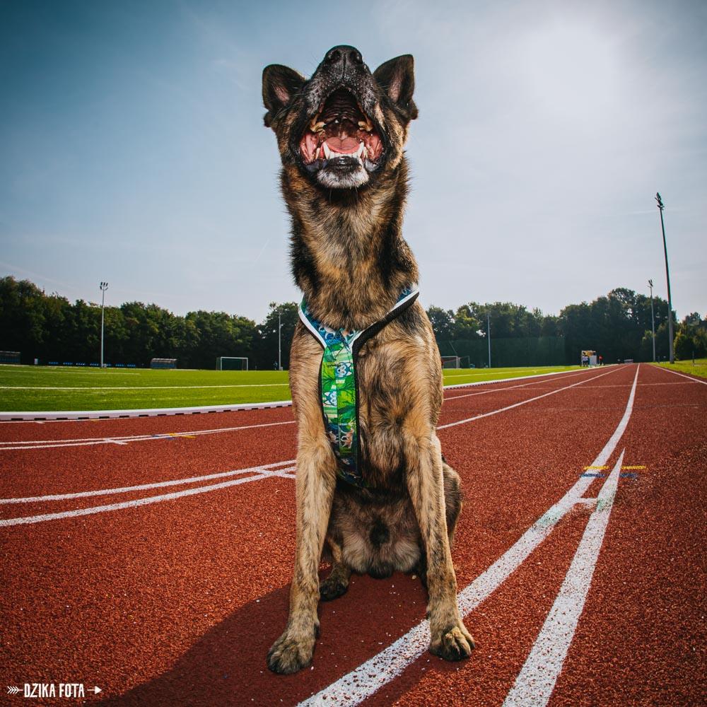 psi fotograf poznań