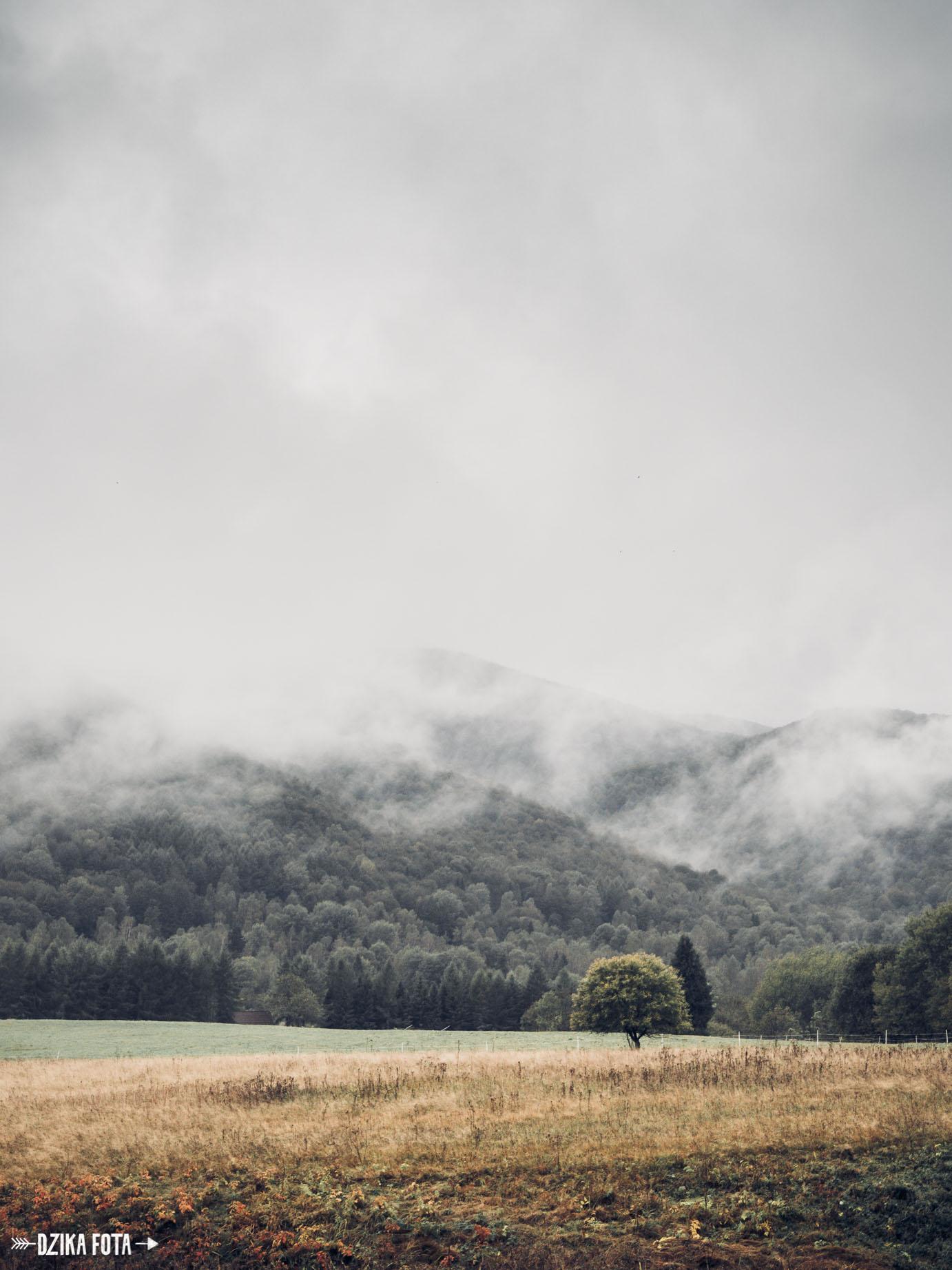 Bieszczady fotograf natura