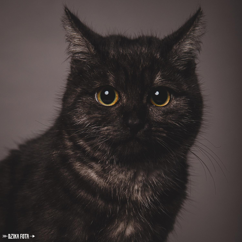 kot fotograf poznań