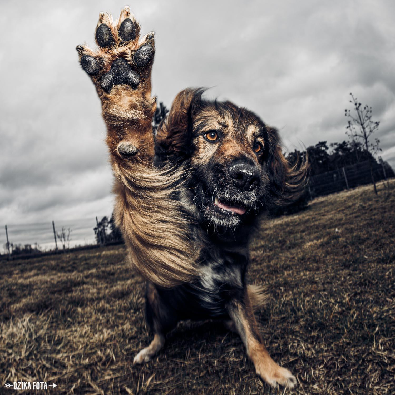 pies fotografia poznań